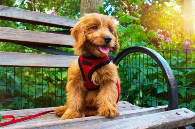 Dog on a park bench.