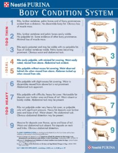 Dog Body Condition Chart