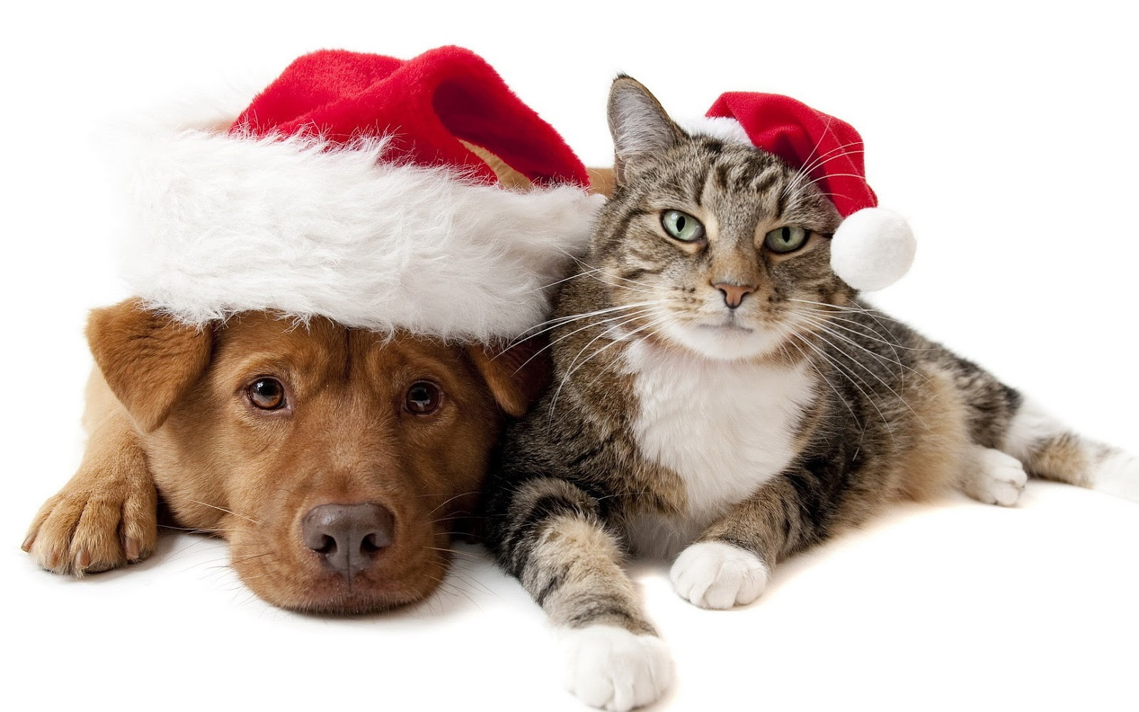 Dog & Cat with Christmas Hats