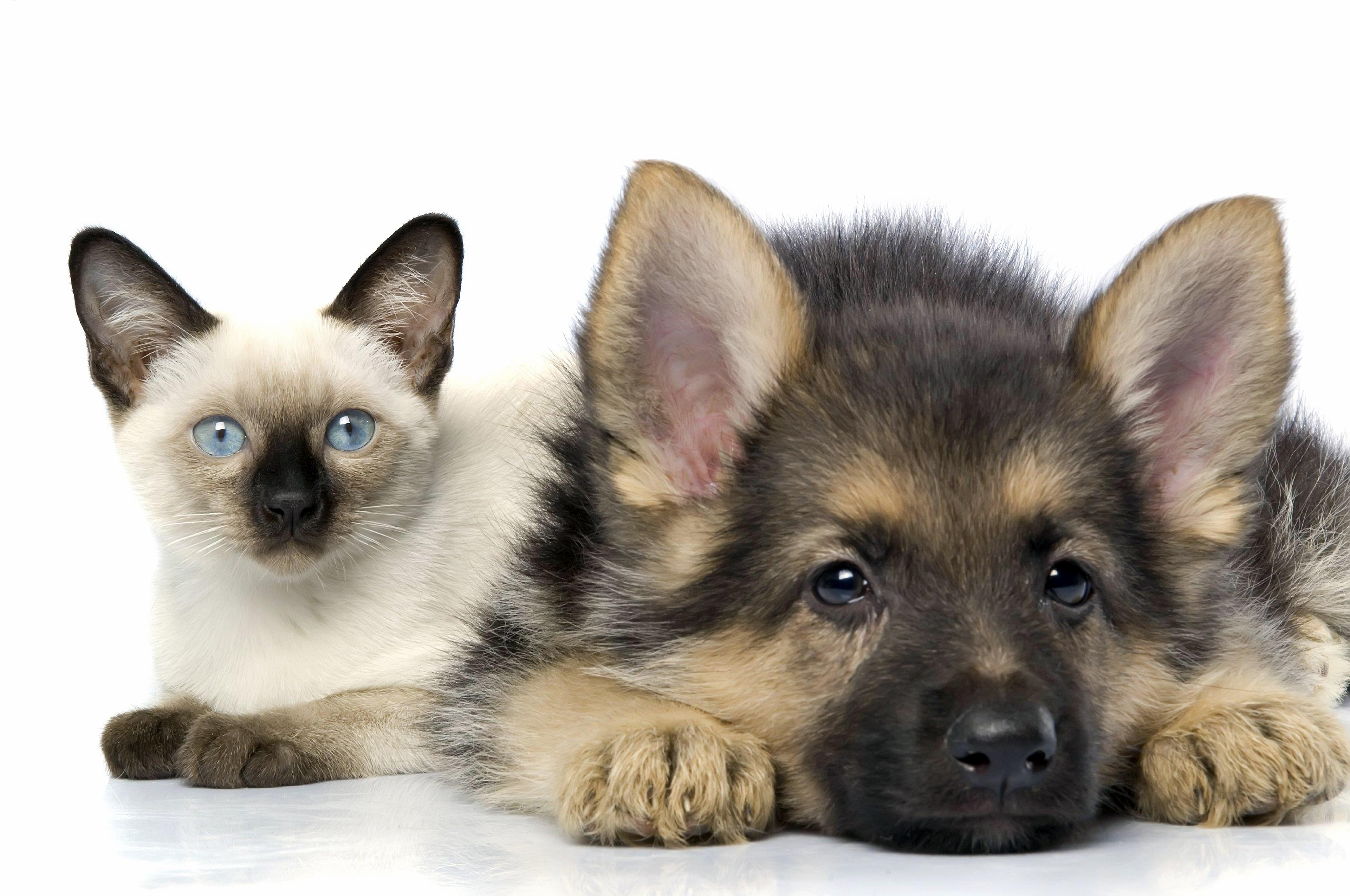 cat & dog resting