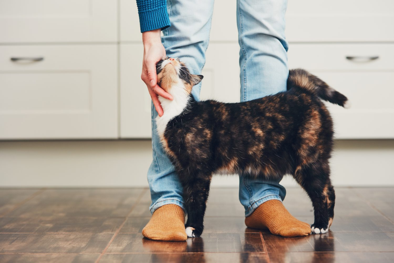 Cat loving owner