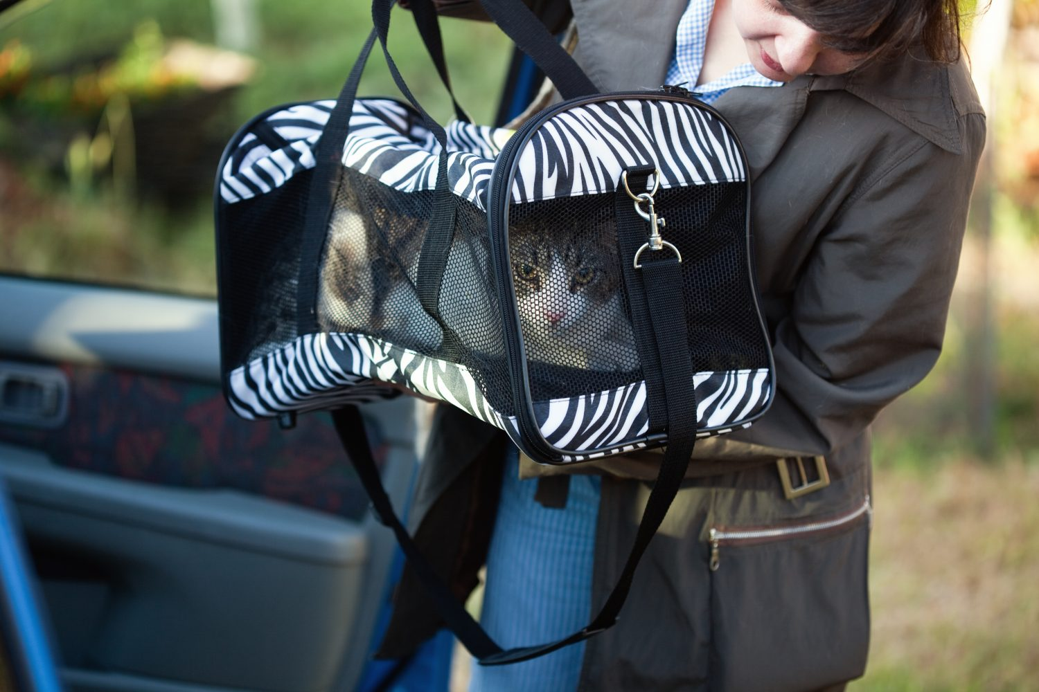 Packing cat for evacuation.