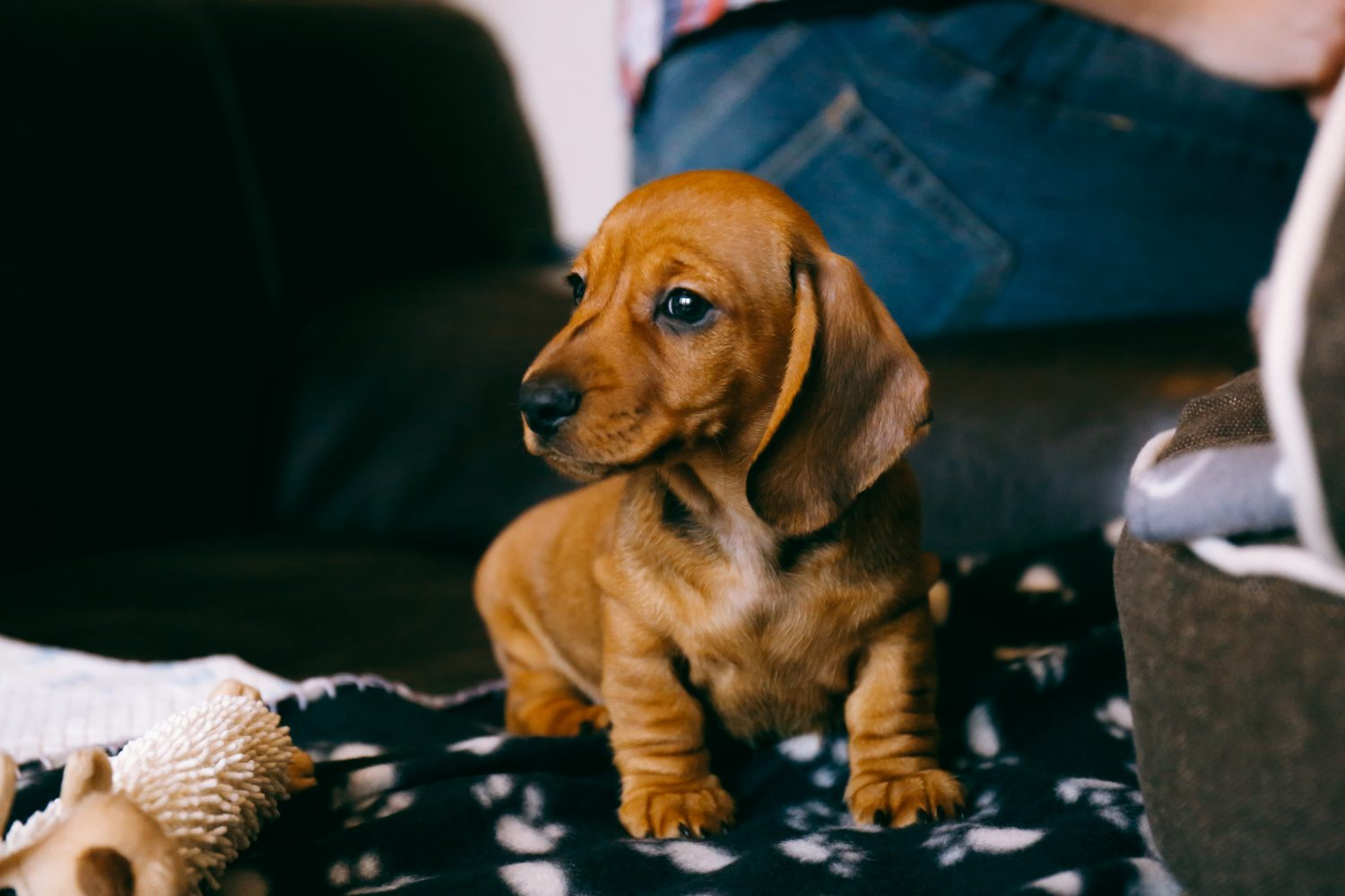 Bringing Home A New Puppy: 9 Tips to Prep Your House